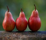 Pears D Anjou_Red