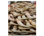 Frozen Shrimp_Wild Gulf